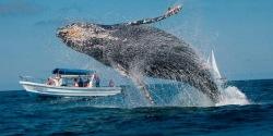 ReefJet abre excursiones a Samaná para el avistamiento de ballenas