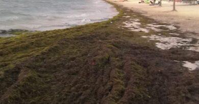 Riviera Maya acumula días con varias toneladas de sargazo